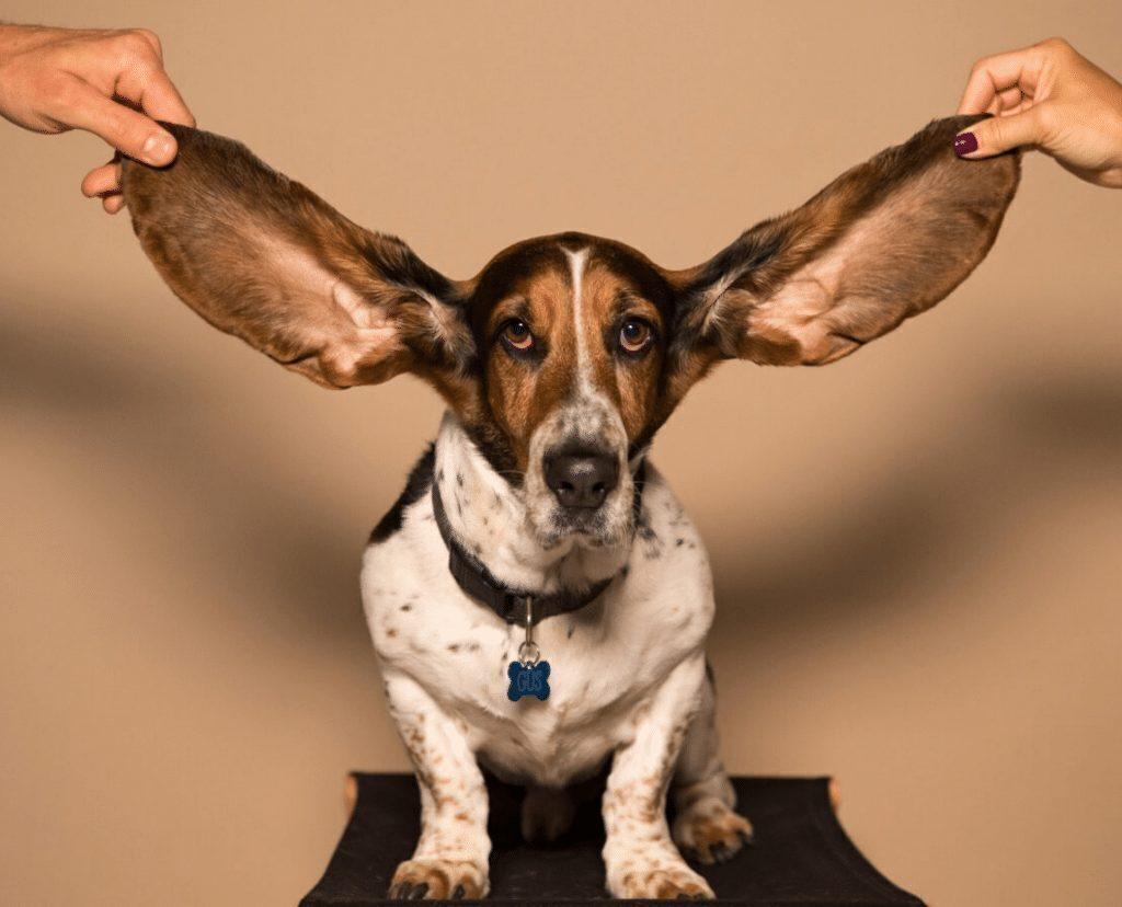 Можно ли натренировать слух? [перевод]