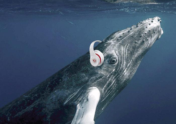 Ученые транслируют звук с океанской глубины в 1 200 метров