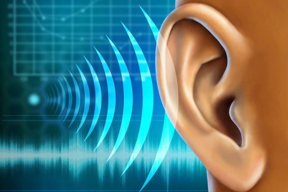 Ученые обнаружили белки, способные восстановить поврежденный слух