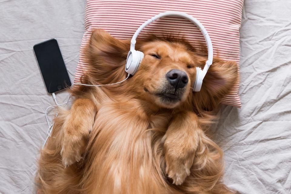 Исследование: спокойная фортепианная музыка позитивно влияет на домашних животных